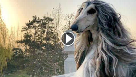 38 ألف دولار  مصروف أجمل كلب في العالم