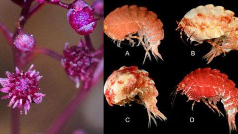 بالصور.. 10 كائنات حية اكتشفت حديثا، لم نكن نعلم بوجودها قبل الآن!