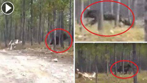 بالفيديو.. وحش ضخم وغريب بثير الرعب