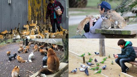 إليكم 6 مدن يعيش فيها الحيوانات بجانب البشر