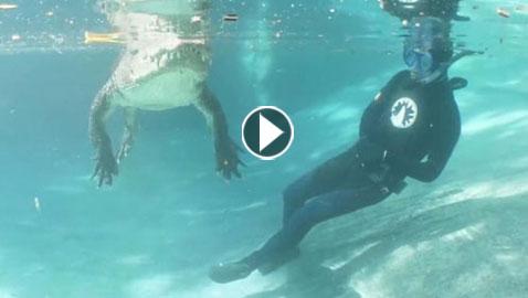 فيديو مثير:غواص متهور يخاطر بحياته ويسبح بجوار تمساح ضخم
