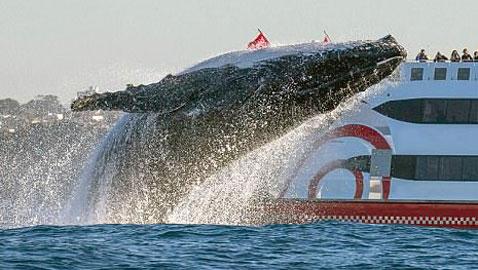 صور مدهشة: مصور محظوظ يتمكن من تصوير لقطات نادرة لحوت أحدب