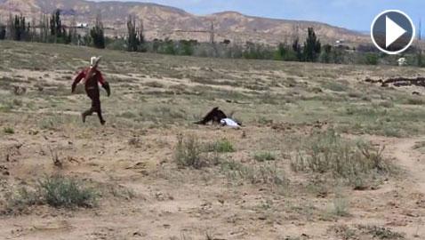 فيديو مرعب.. نسر يحاول اختطاف طفلة