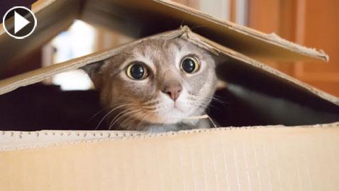 لهذا السبب القطط تحب للصناديق.. فيديو