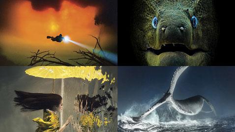أشهر وأجمل الصور الفائزة بمسابقة التصوير تحت سطح الماء