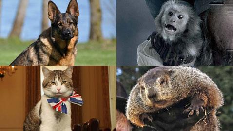إليكم أبرز الحيوانات التي حظيت بوظائف مريحة يتمناها كثير من البشر