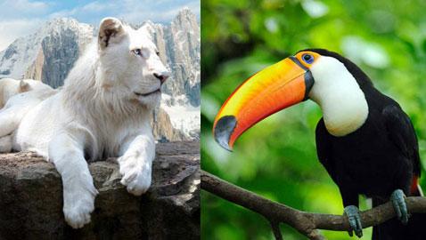 بالصور.. تعرفوا على أغلى الحيوانات ثمنا حول العالم