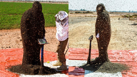 صور: سعودي يحاول دخول موسوعة غينيس بوقوف 100 كيلو من النحل على جسمه!