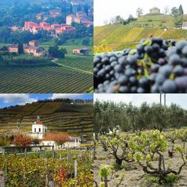 أشهر المناطق لزراعة العنب وإنتاج النبيذ في أوروبا