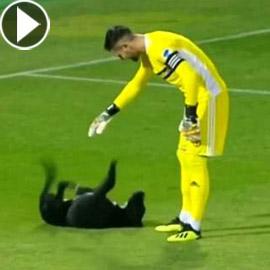 فيديو طريف.. كلب يقتحم ملعبا ويتسبب في تعطيل مباراة كرة قدم