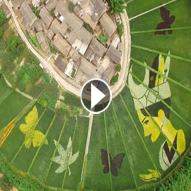 عمل فني مدهش للرسم باستخدام الزهور.. فيديو وصور