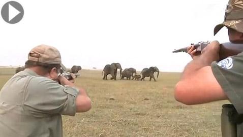 بالفيديو.. قطيع أفيال يهاجم صيادين لإطلاقهم النار على واحد منهم