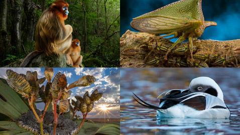 إليكم أفضل صور للحياة البرية وأروعها لعام 2018