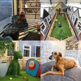 صور: رجل أعمال يقيم فندق كلاب فاخر من الدرجة الأولى في بريطانيا