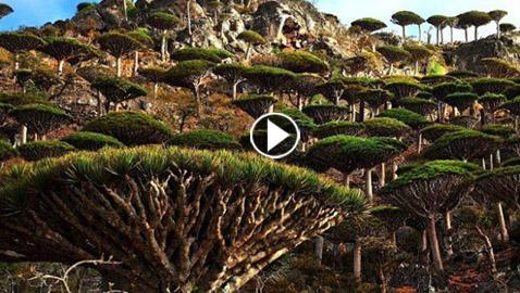 بالصور.. جولة مدهشة في أغرب الغابات في العالم