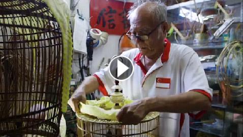 قصور في الهواء.. رجل يصنع أجمل أقفاص للعصافير وأفخمها! فيديو