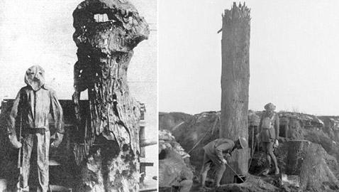 لهذا الغرض استخدمت الأشجار خلال الحرب الكبرى