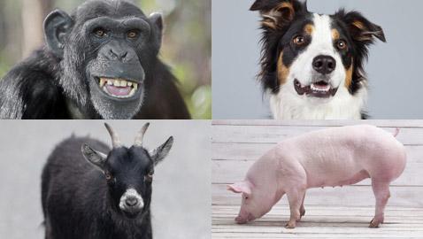 من أمريكا وصولا لروما.. 10 حيوانات ترشحت لمناصب سياسية!