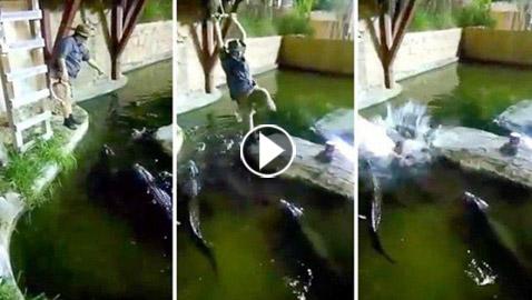فيديو مروع.. شاهدوا لحظة سقوط رجل في حوض تماسيح!