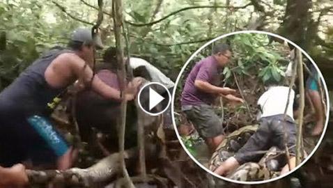 فيديو مرعب.. معركة قاتلة بين صيَّادِينَ وثعبانٍ ضخم