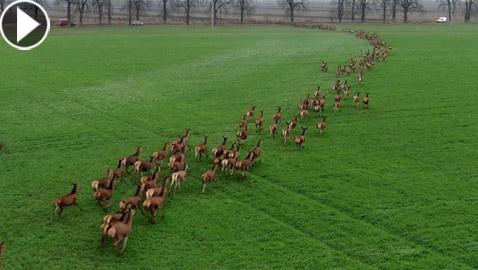 فيديو مذهل لهجرة أجمل مخلوقات الأرض في أوروبا تبهر مشاهديها!