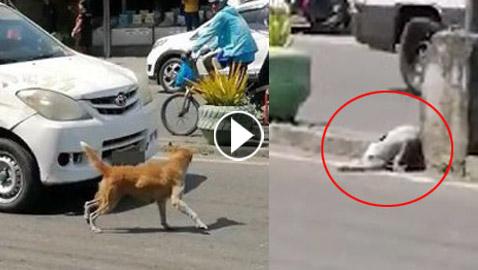 فيديو مؤثر.. أنثى كلب تستجدي المارة لإنقاذ جروها المصاب