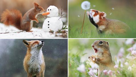 التفاصيل الدقيقة مذهلة.. مصور نمساوى يلتقط صورا رائعة للحياة البرية