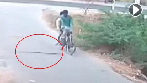 فيديو صادم: كوبرا قاتلة تهاجم مستقلي دراجة