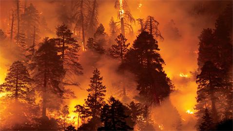 هذا ما تتسببه حرائق الغابات ... الكارثة تأتي بعد وقت