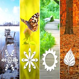 أي فصل من السنة هو المفضل لديك؟ إليك السبب وما علاقته بشخصيتك!