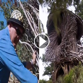 بالفيديو: تعرفوا على الرجل الذي يبني أعشاش للبشر وليس للطيور