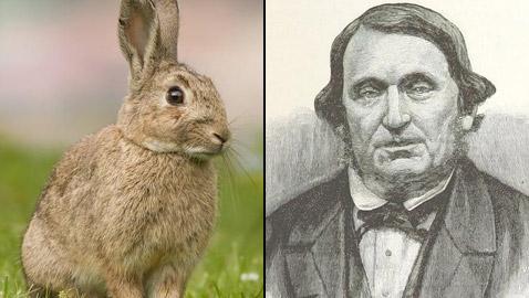 رجل تلاعب بالنظام البيئي لأستراليا فتسبب بإبادة الأرانب من البلاد!