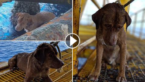 إنقاذ كلب تمكن من السباحة مسافة تزيد على 220 كم في البحر!
