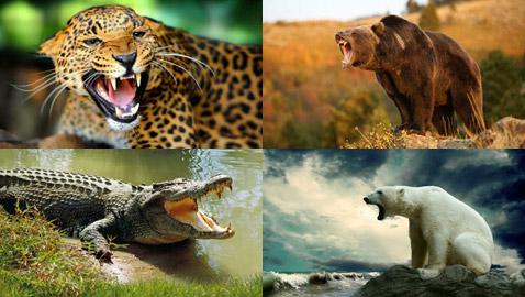 تعرفوا على أقوى قضمات الحيوانات المفترسة في العالم