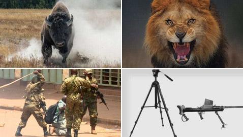 صور كادت تقتل مصوريها الذين خاطروا بحياتهم لالتقاط اللقطة المثالية