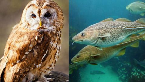 مخلوقات تطورت بشكل مدهش للبقاء على قيد الحياة.. تعرفوا اليهم
