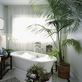 أفضل 5 نباتات توضع في غرفة الحمام