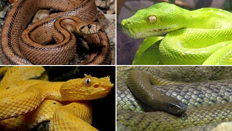 إليكم 15 من أكثر الثعابين السامة وأكثرها خطورة في العالم