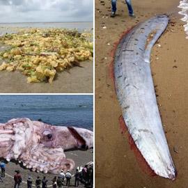 بالصور: أغرب الأشياء والاكتشافات التي تم العثور عليها على شواطئ البحر
