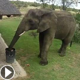 فيديو مدهش.. فيل يجمع القمامة من الأرض ويضعها في سلة النفايات!