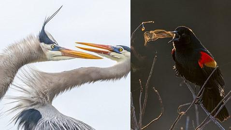 أفضل الصور الفائزة في مسابقة التصوير الفوتوغرافي لحياة الطيور