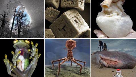 صور مدهشة ونادرة تكشف لنا الجانب غير المرئي من بعض الأشياء