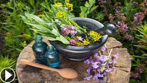 النباتات الطبية: كنوز الطبيعة تحوي مكوناتها قدرات هائلة.. فيديو