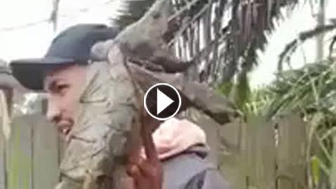 بالفيديو: العثور على حيوان نادر داخل المقابر يأكل جثث الأموات ويصدر اصوات مرعبة !