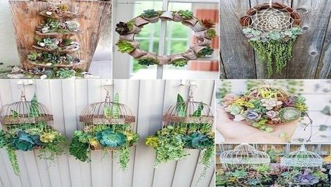 تشكيلات مدهشة للنباتات في المنزل