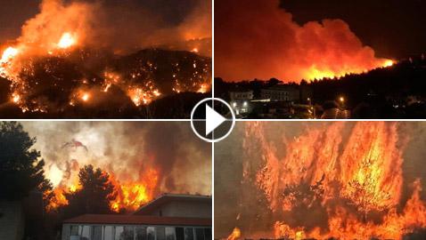 فيديوهات مؤلمة تدمي القلب.. لبنان يحترق والإطفاء خارج الخدمة!