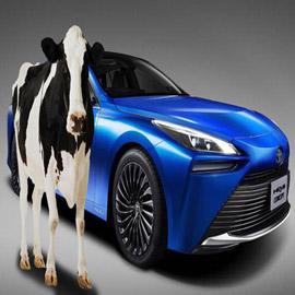 آخر صيحات اليابان... سيارات تعمل على روث الأبقار!