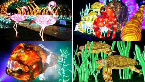 بالصور: مصابيح عملاقة على شكل حيوانات بحرية تتلألأ في باريس