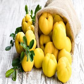 فاكهة هيفا التي سبقت التفاحة.. تعرفوا إلى ثمرة السفرجل التي زرعت  ..