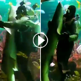 فيديو مدهش.. غواص يراقص سمكة قرش ضخمة في مشهد رومانسي مميز!